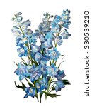 Delphinium Flowers  Isolated O...