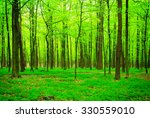 beautiful forest landscape in... | Shutterstock . vector #330559010