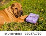 shar pei and gift box | Shutterstock . vector #330571790