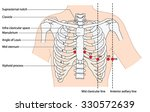 placement of ecg ekg leads... | Shutterstock .eps vector #330572639