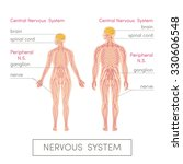 The Nervous System Of A Human....