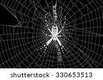 spider and spider web | Shutterstock . vector #330653513
