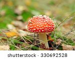 Red Toadstool Macro On Autumna...