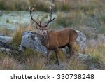 Red Deer Stag In Rocky Highlan...