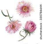 Watercolor Asters Flower Set ...