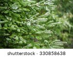 Snow Fir Tree Branches Under...