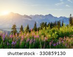 Wild Flowers At Sunset In The...