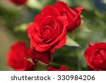 Detail Of Red Roses In The...