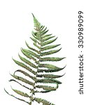 Fern Leaves Isolated On A Whit...