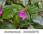 nature garden flowers background   Shutterstock . vector #331063070