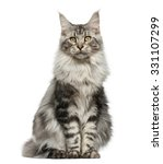 Maine Coon Sitting In Front Of...