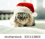 Stock photo christmas cat in red santa claus hat 331113803