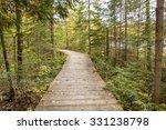 Boardwalk Leading Through a Coniferous Forest in Autumn - Algonquin Provincial Park, Ontario, Canada