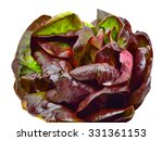 curly lettuce isolated on white | Shutterstock . vector #331361153