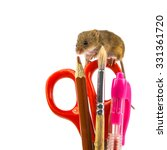 scissors, pen, brush and pencil office utensils with harvest mouse (Micromys minutus) and clipping path as a concept for delayed homework - stock photo