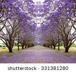 Avenue Of Vibrant Purple...