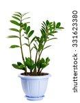 houseplant isolated on white... | Shutterstock . vector #331623380