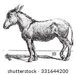 ass  vintage engraved... | Shutterstock .eps vector #331644200