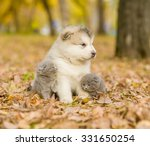 Stock photo affectionate cute kittens and alaskan malamute puppy in autumn park 331650254