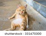 Stock photo orange cross white line cat make boring face cause interruption sleeping time 331670300