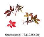 nature  season  autumn and... | Shutterstock . vector #331725620