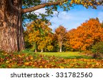 autumn leaves under a big tree... | Shutterstock . vector #331782560