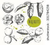 set of hand drawn walnuts.... | Shutterstock .eps vector #331784258
