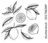 hand drawn vector illustration  ... | Shutterstock .eps vector #331788389