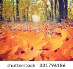 autumn leaves in forest | Shutterstock . vector #331796186