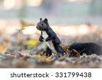 squirrel in autumn leaves | Shutterstock . vector #331799438
