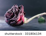 Frozen Red Rose On Black...