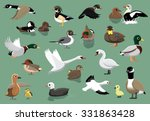 Us Ducks Cartoon Vector...