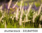 grass flowers in the meadow in... | Shutterstock . vector #331869500