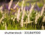 grass flowers in the meadow in...   Shutterstock . vector #331869500