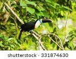 large toucan bird shot in the... | Shutterstock . vector #331874630