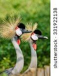 Beautiful Grey Crowned Crane...