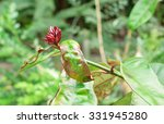 capture the red flower on its...   Shutterstock . vector #331945280