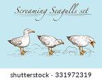 Seagulls Behavior. Set Of 3...