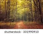 autumn trees in the forest | Shutterstock . vector #331990910