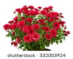 Bouquet Of Red Flowers Of...