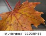 Autumn Leaf. An Autumn Leaf...