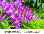 Purple Pink Orchid From...