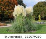 Pampas Grass  Cortaderia...