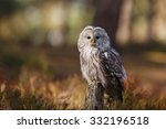 Ural Owl Portrait Close Up