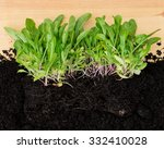 Seedling Plants With Exposed...