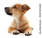 Stock photo puppy isolated on white 332410160