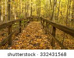 Autumn Forest Path. Forest...