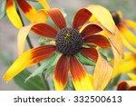 rudb ckia | Shutterstock . vector #332500613