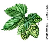 hops with leaves isolated on a... | Shutterstock . vector #332512538