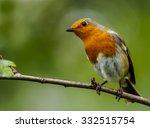 european robin   Shutterstock . vector #332515754